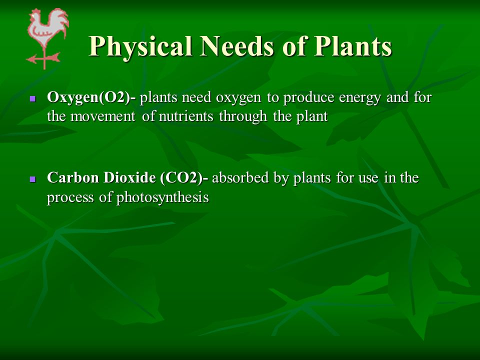 Physical Needs of Plants