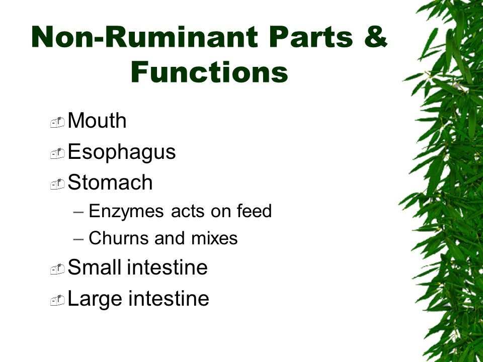 Non-Ruminant Parts & Functions