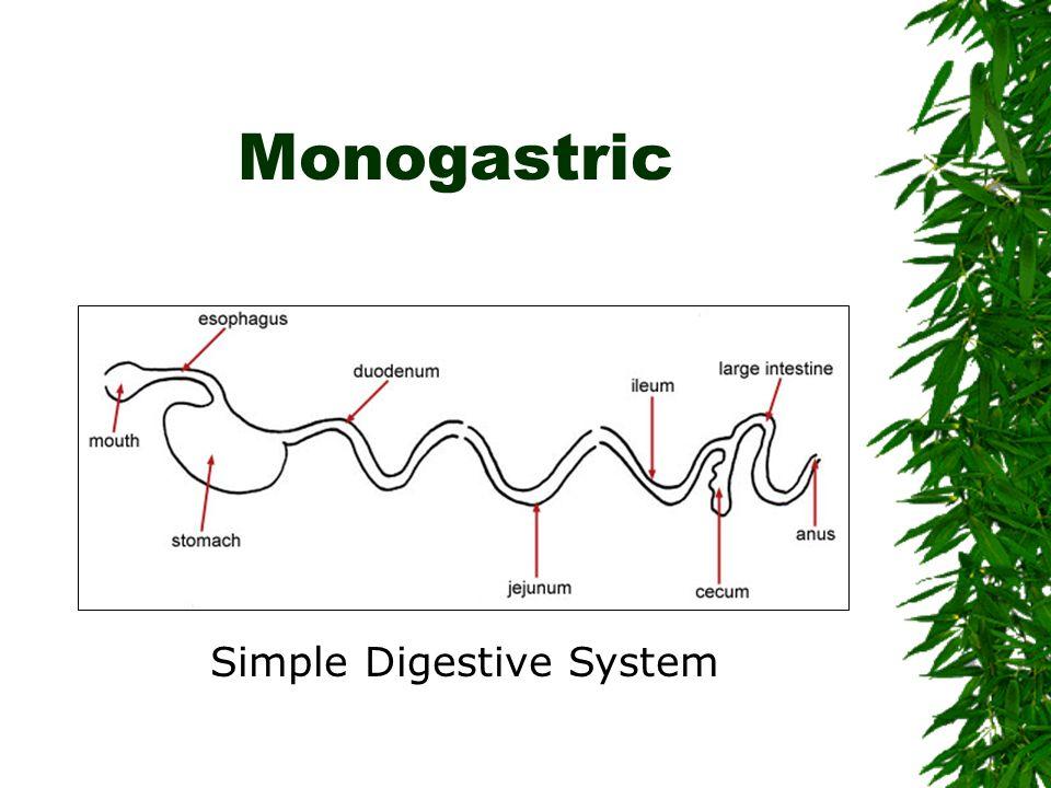 Simple Digestive System