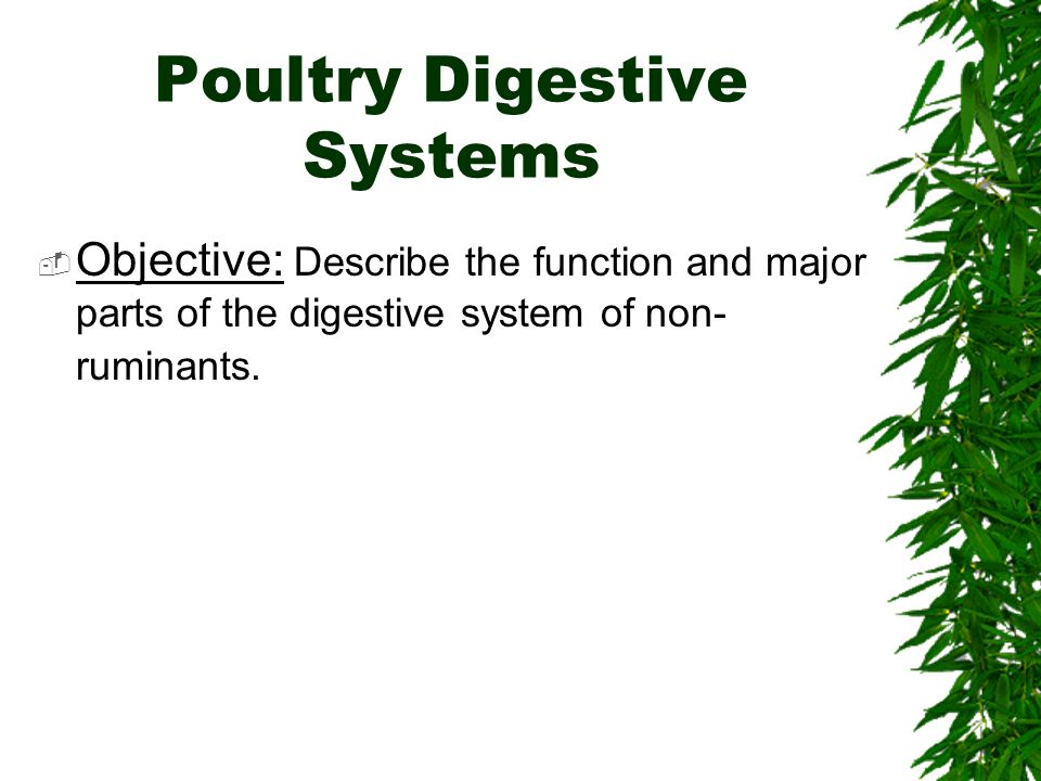 Poultry Digestive Systems