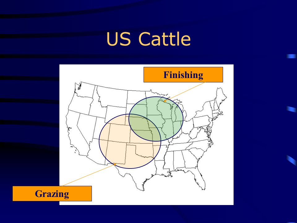 US Cattle Finishing Grazing