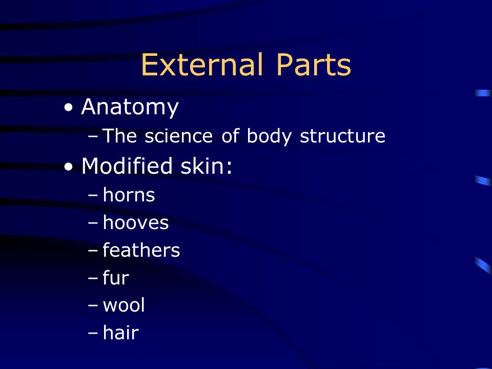 External Parts Anatomy Modified skin: The science of body structure