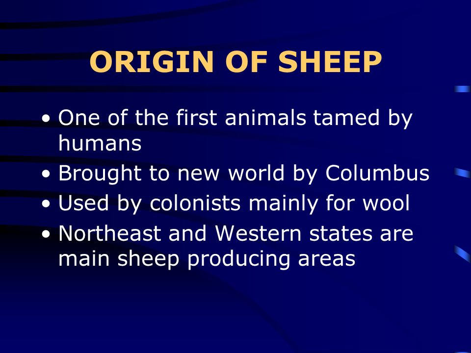 ORIGIN OF SHEEP One of the first animals tamed by humans