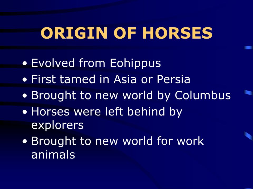 ORIGIN OF HORSES Evolved from Eohippus First tamed in Asia or Persia