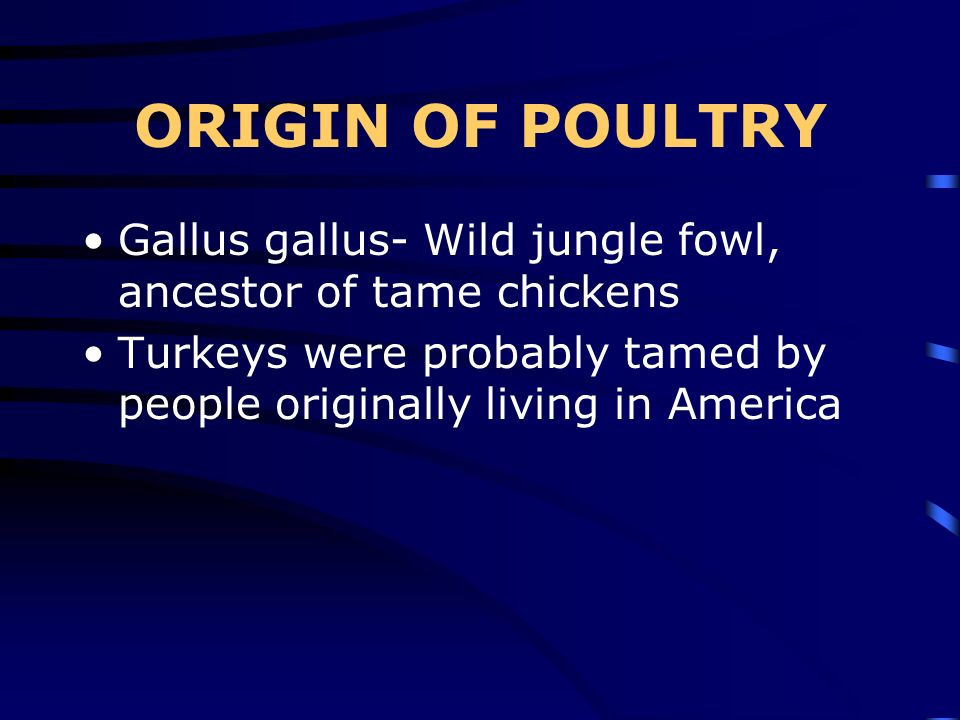 ORIGIN OF POULTRY Gallus gallus- Wild jungle fowl, ancestor of tame chickens.