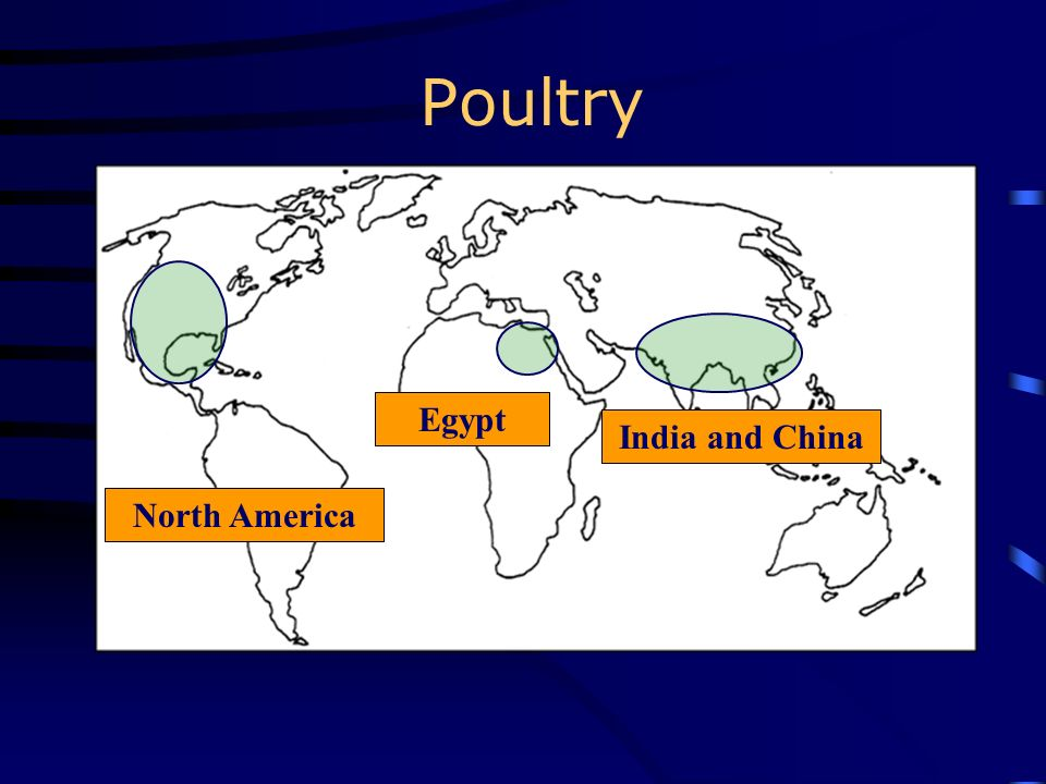 Poultry Egypt India and China North America