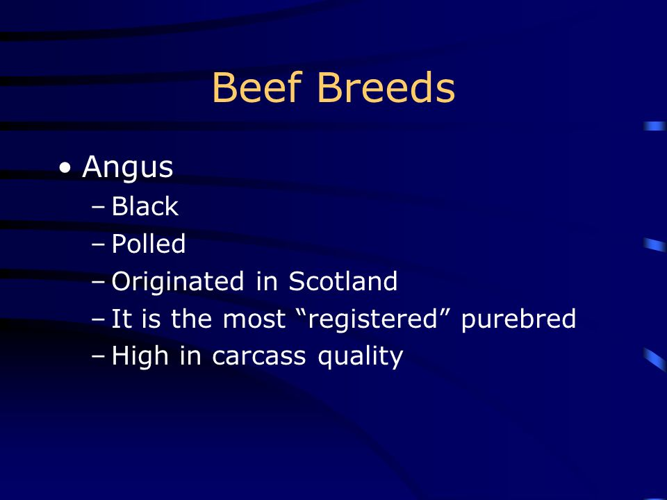 Beef Breeds Angus Black Polled Originated in Scotland