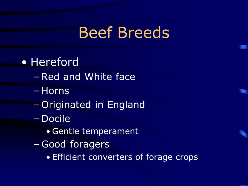 Beef Breeds Hereford Red and White face Horns Originated in England