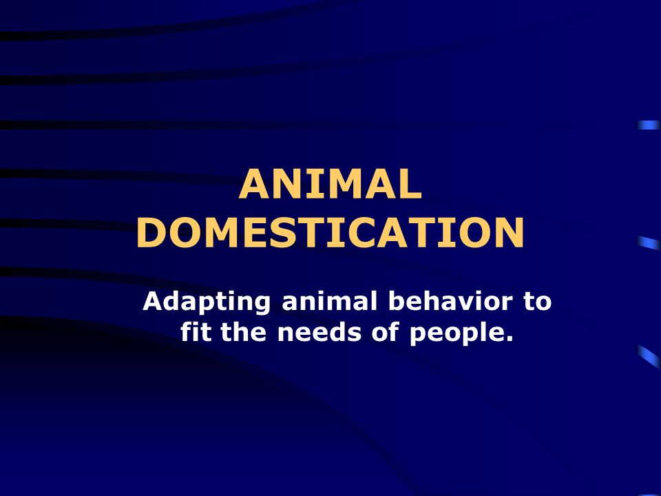 Adapting animal behavior to fit the needs of people.