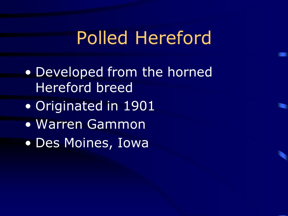 Polled Hereford Developed from the horned Hereford breed