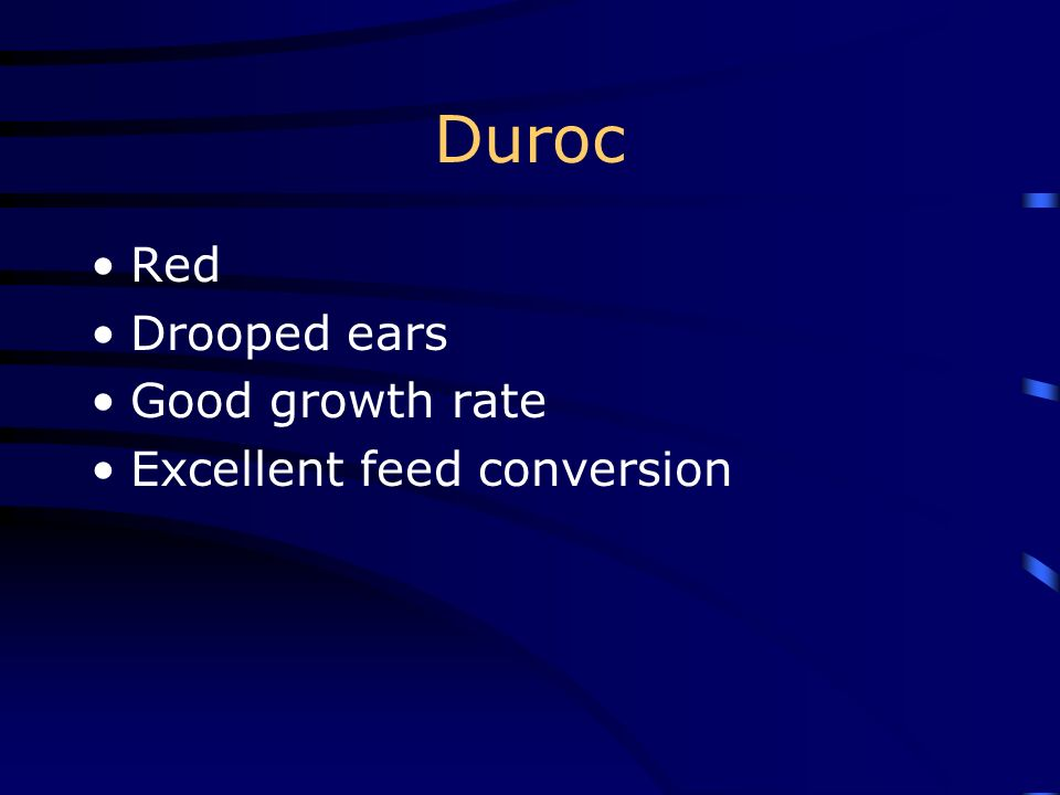 Duroc Red Drooped ears Good growth rate Excellent feed conversion