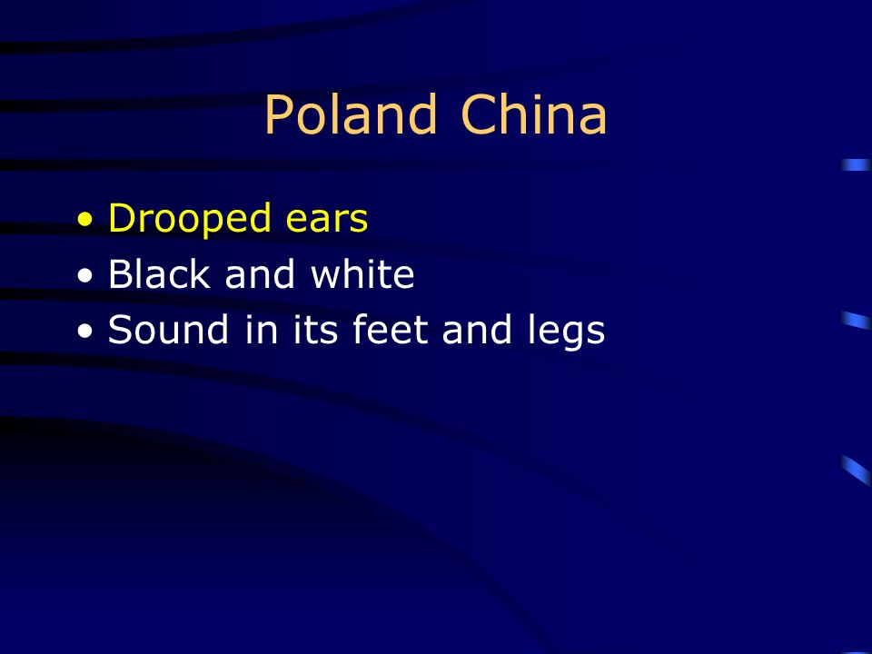 Poland China Drooped ears Black and white Sound in its feet and legs