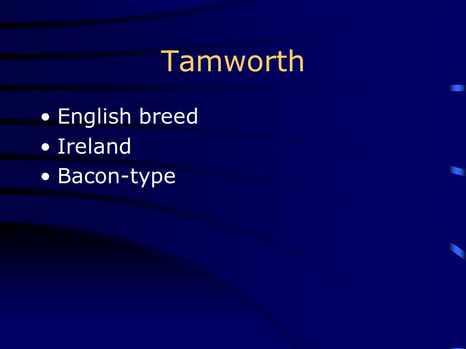 Tamworth English breed Ireland Bacon-type