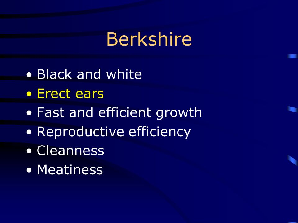 Berkshire Black and white Erect ears Fast and efficient growth