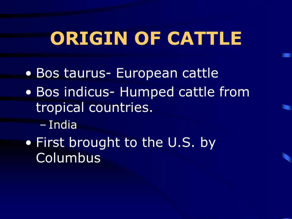 ORIGIN OF CATTLE Bos taurus- European cattle