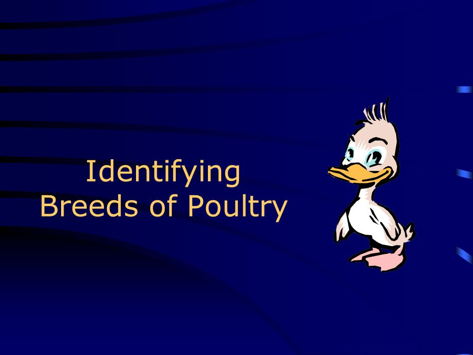 Identifying Breeds of Poultry