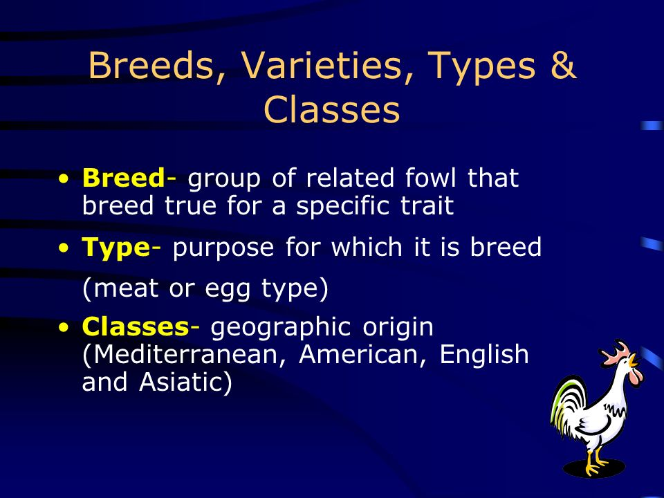 Breeds, Varieties, Types & Classes