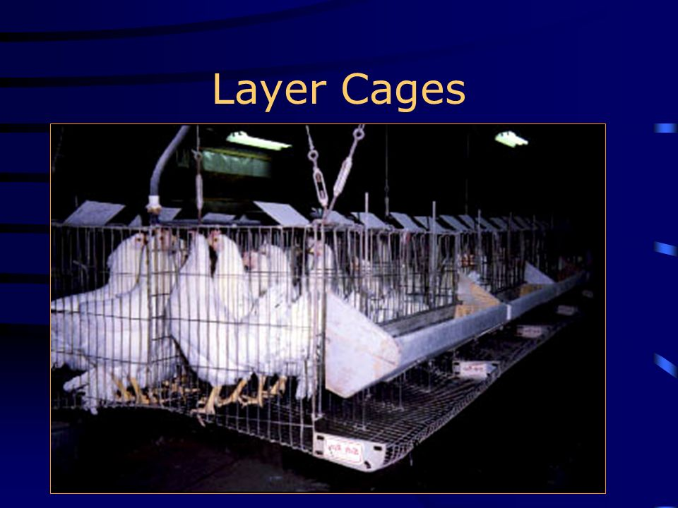 Layer Cages