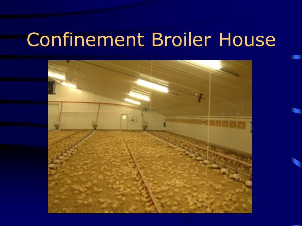 Confinement Broiler House