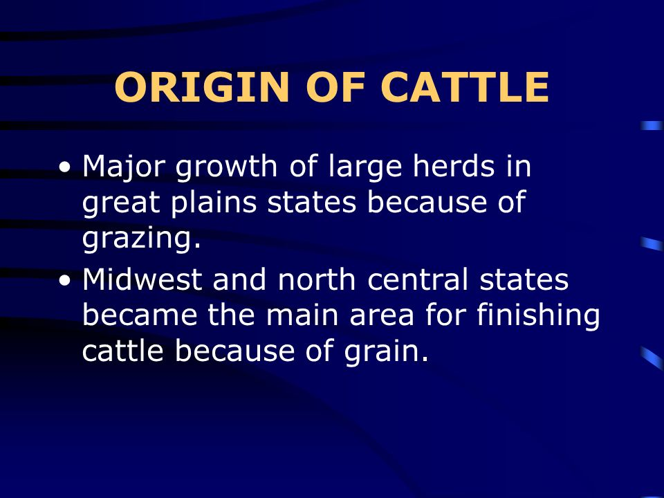 ORIGIN OF CATTLE Major growth of large herds in great plains states because of grazing.