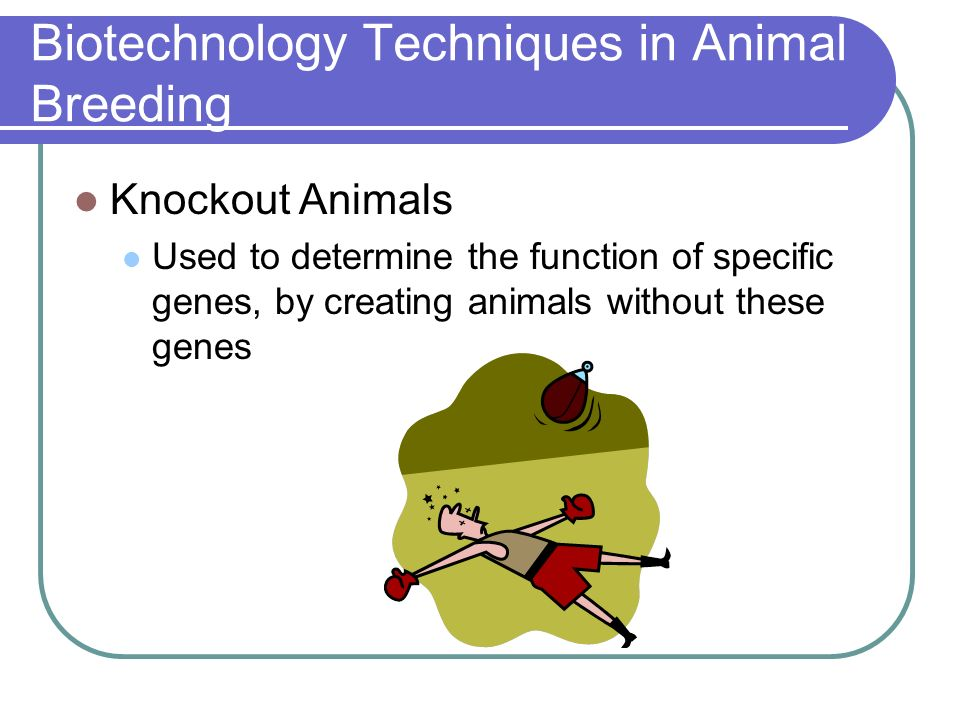 Biotechnology Techniques in Animal Breeding
