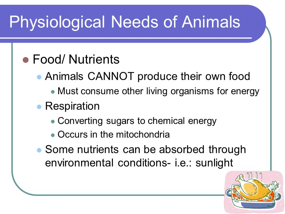 Physiological Needs of Animals