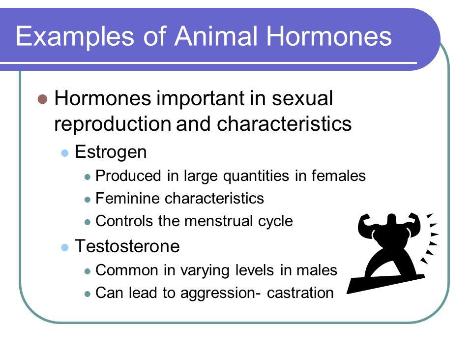 Examples of Animal Hormones
