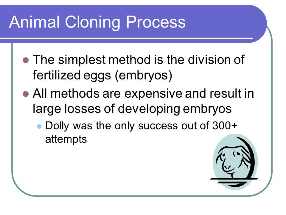 Animal Cloning Process