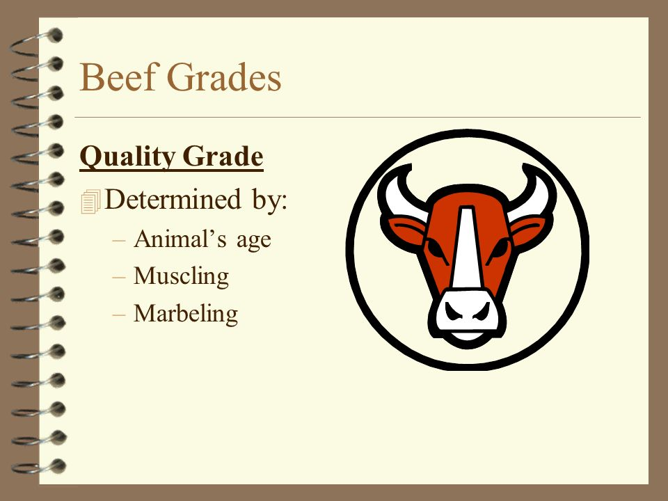 Beef Grades Quality Grade Determined by: Animal's age Muscling