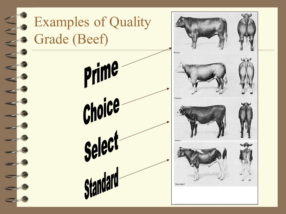 Examples of Quality Grade (Beef)