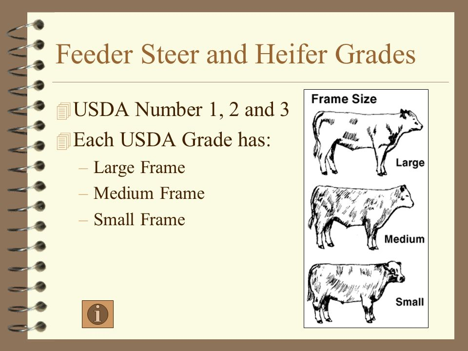 Feeder Steer and Heifer Grades