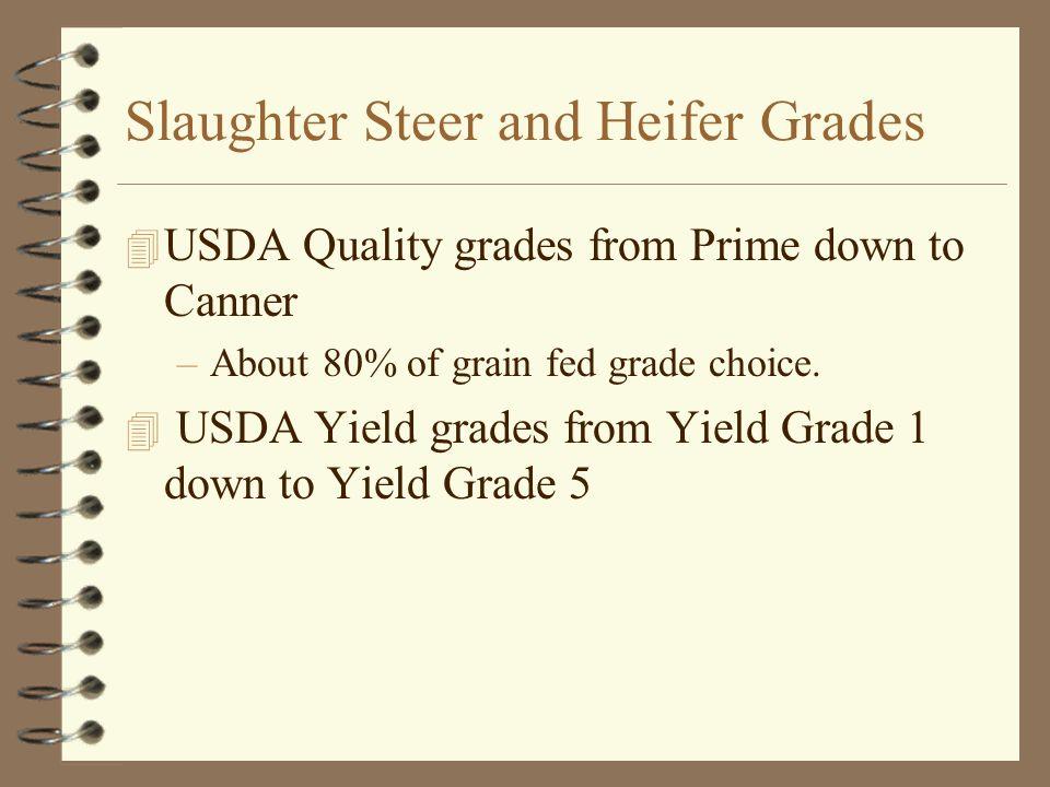 Slaughter Steer and Heifer Grades
