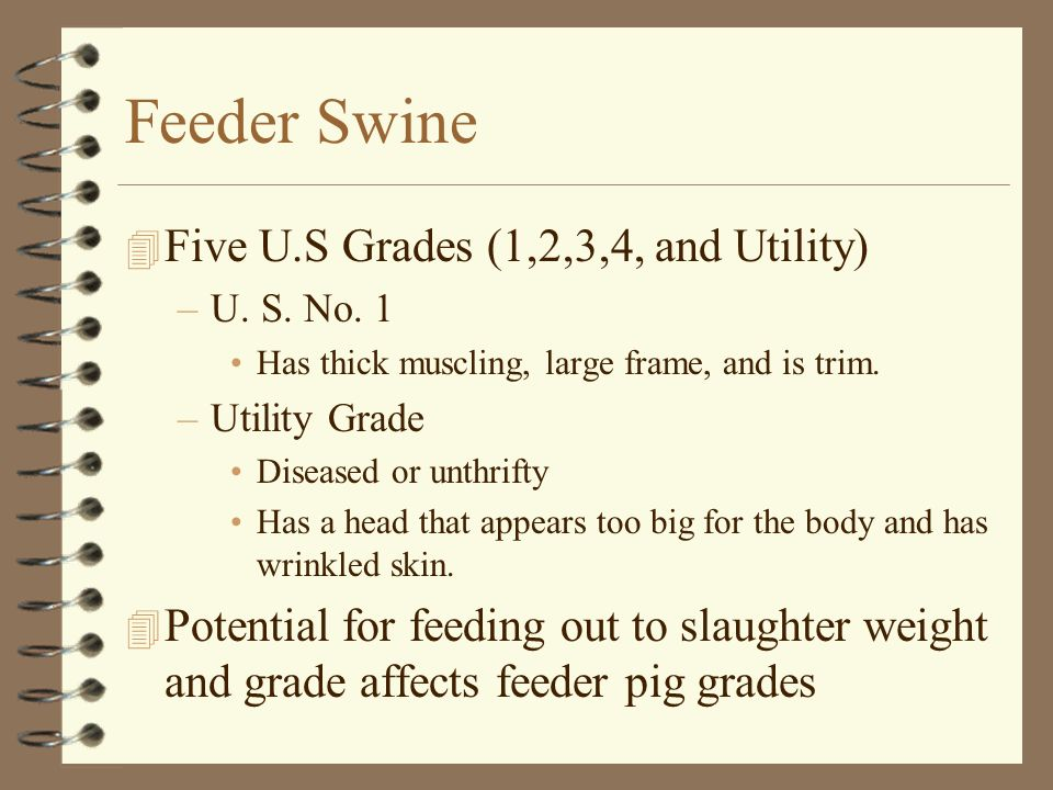 Feeder Swine Five U.S Grades (1,2,3,4, and Utility)