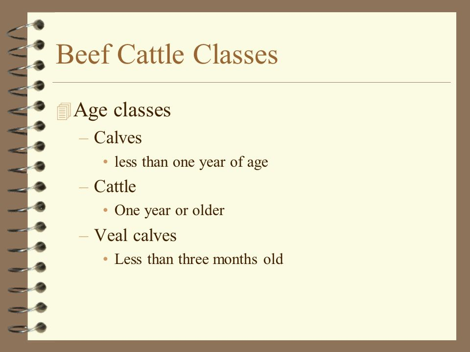 Beef Cattle Classes Age classes Calves Cattle Veal calves