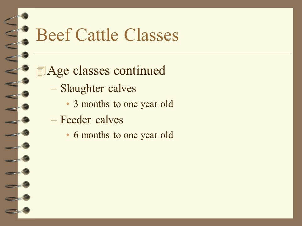 Beef Cattle Classes Age classes continued Slaughter calves