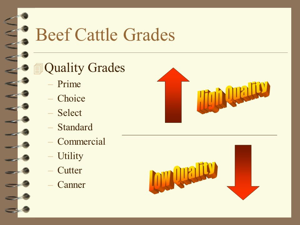 Beef Cattle Grades High Quality Low Quality Quality Grades Prime