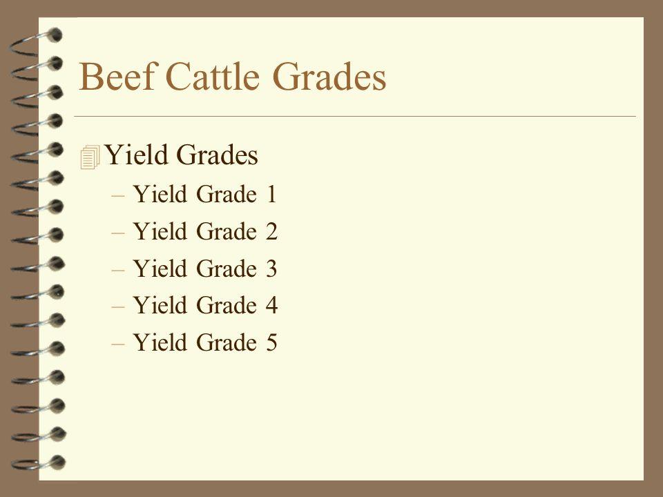 Beef Cattle Grades Yield Grades Yield Grade 1 Yield Grade 2