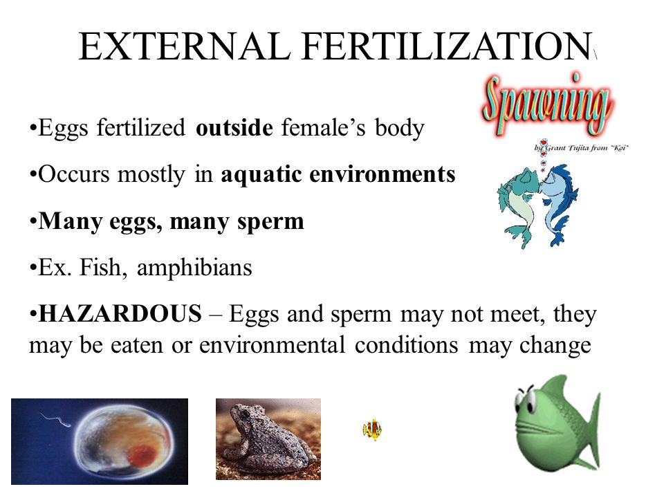 Aim: How are humans adapted for reproduction? - ppt download