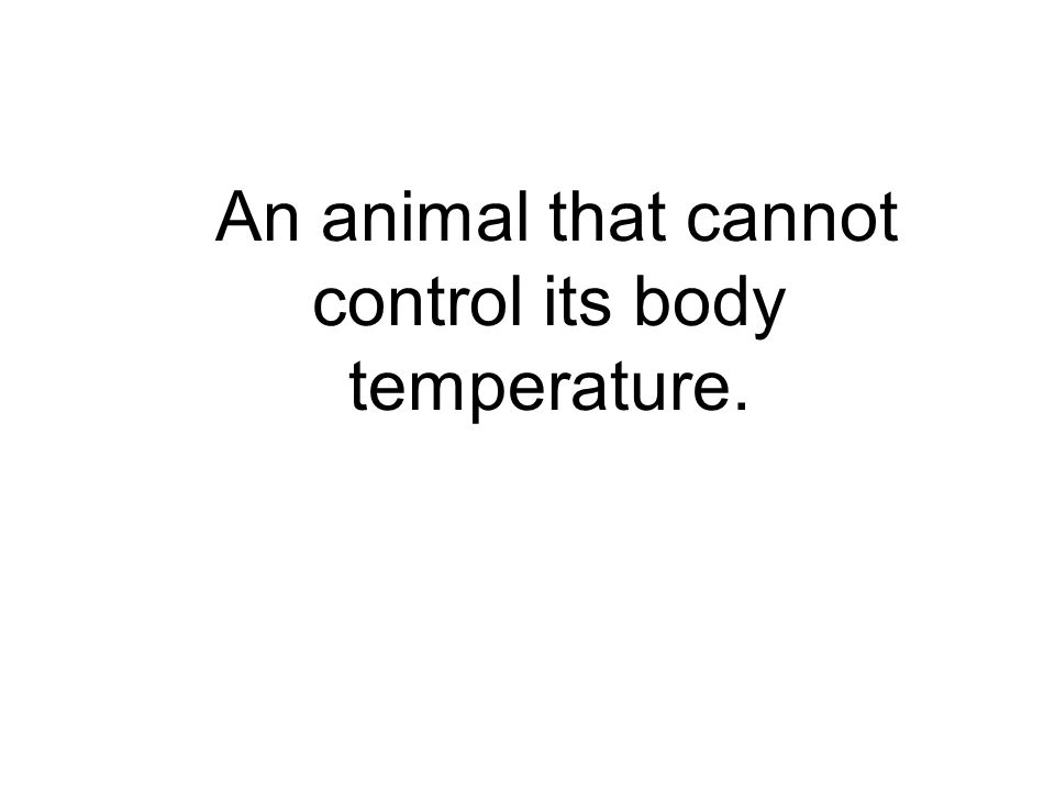 An animal that cannot control its body temperature.