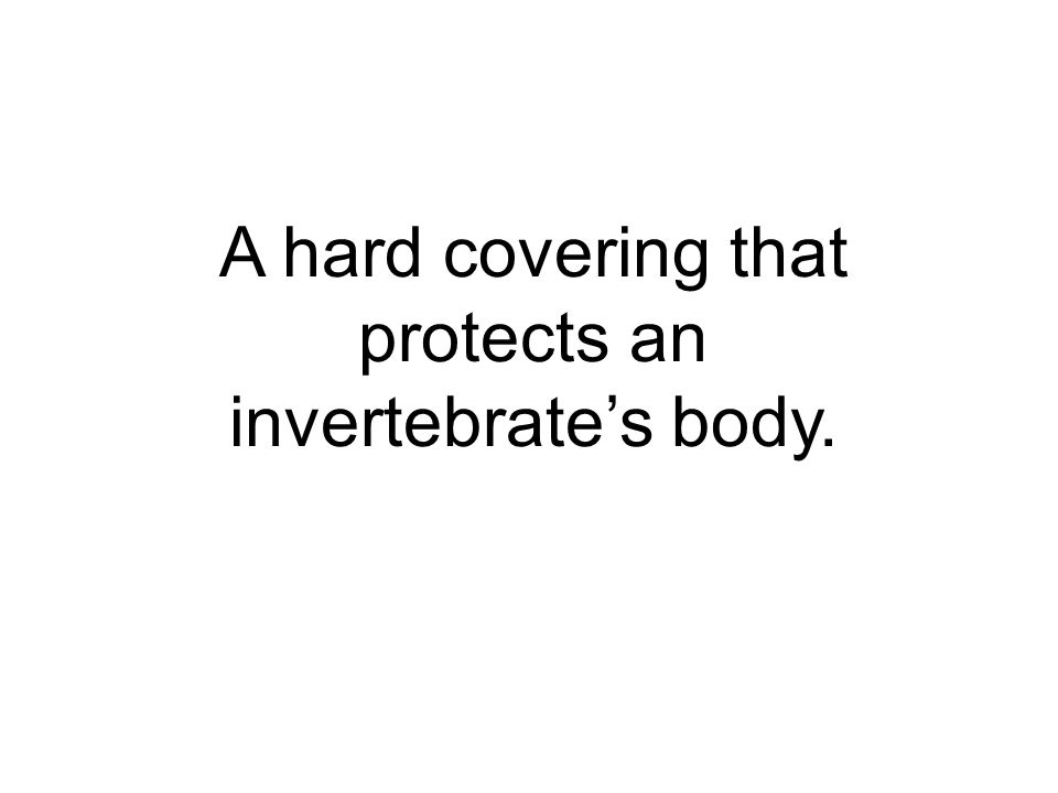 A hard covering that protects an invertebrate's body.