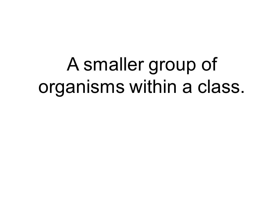 A smaller group of organisms within a class.