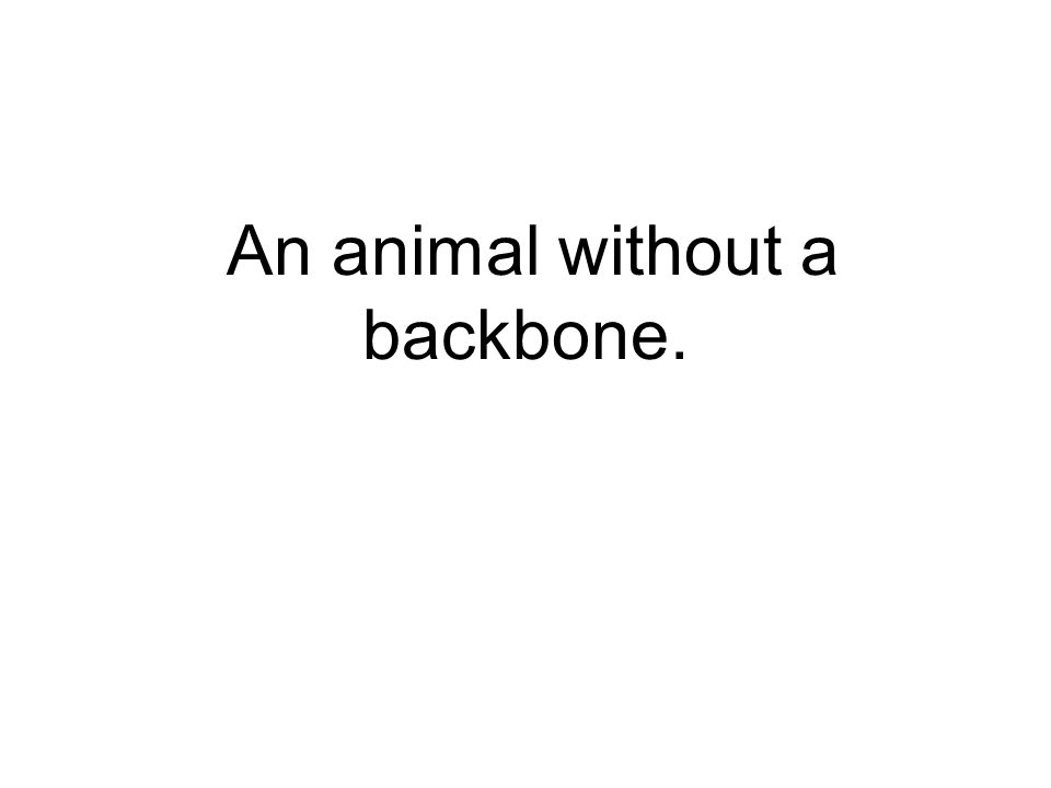 An animal without a backbone.