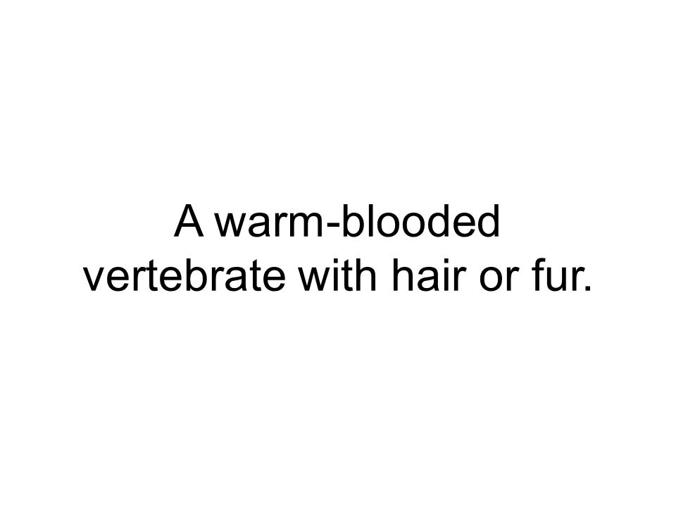 A warm-blooded vertebrate with hair or fur.