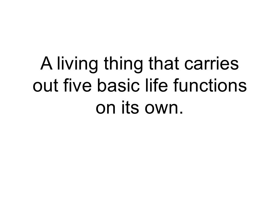 A living thing that carries out five basic life functions on its own.