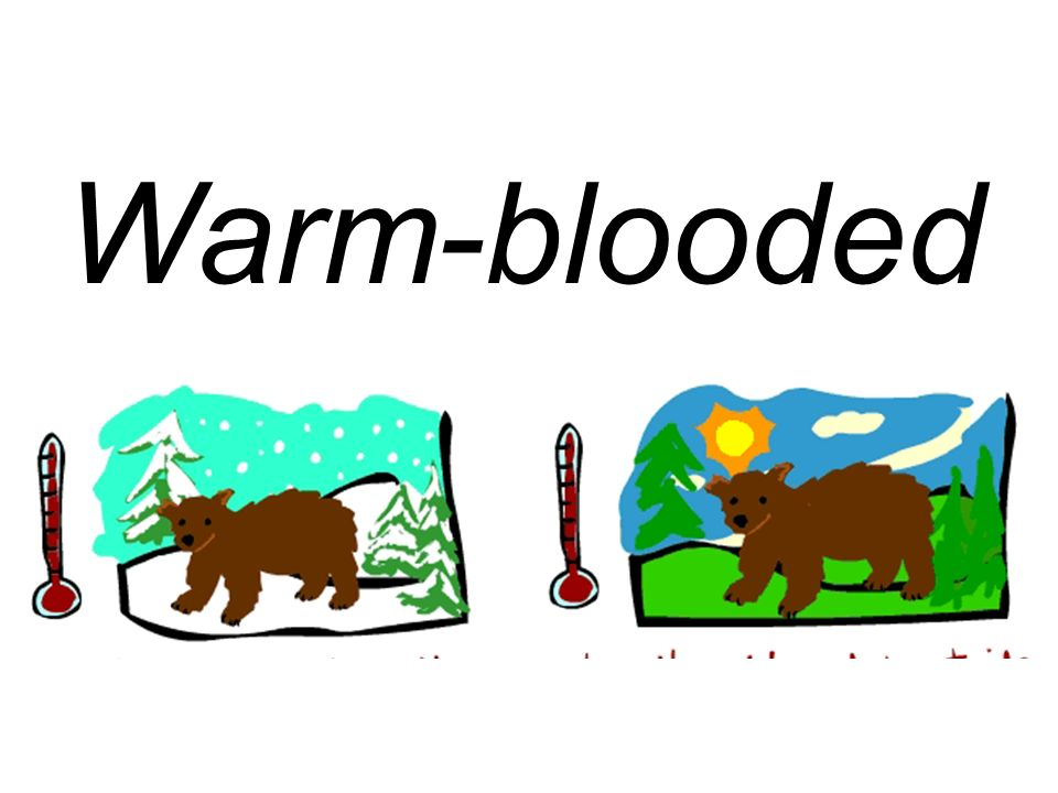 Warm-blooded