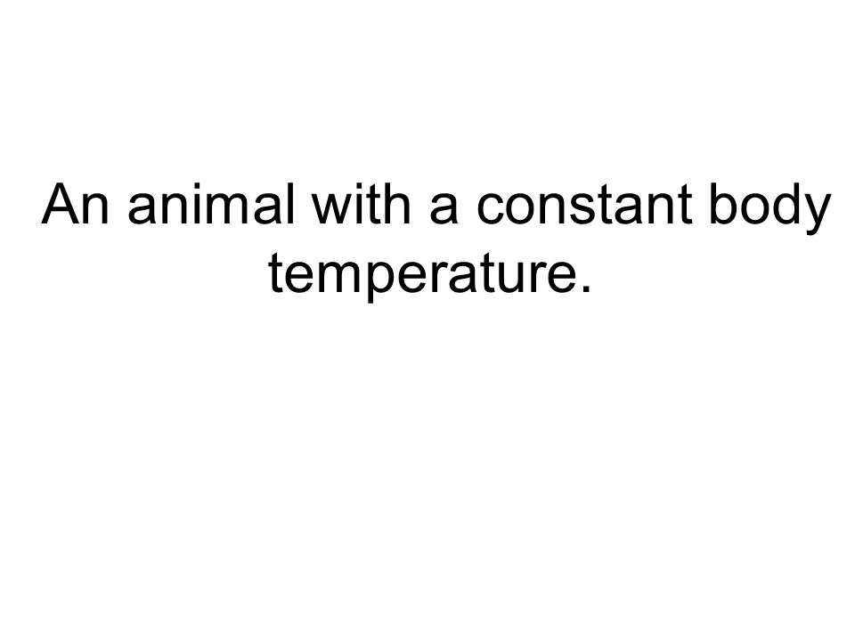 An animal with a constant body temperature.