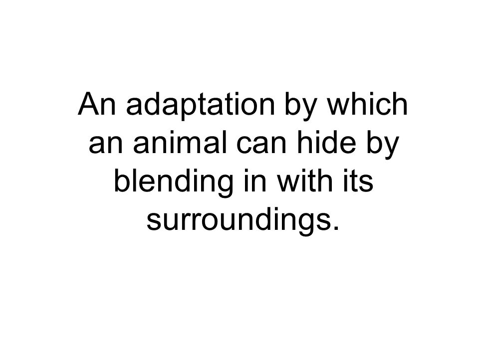 An adaptation by which an animal can hide by blending in with its surroundings.