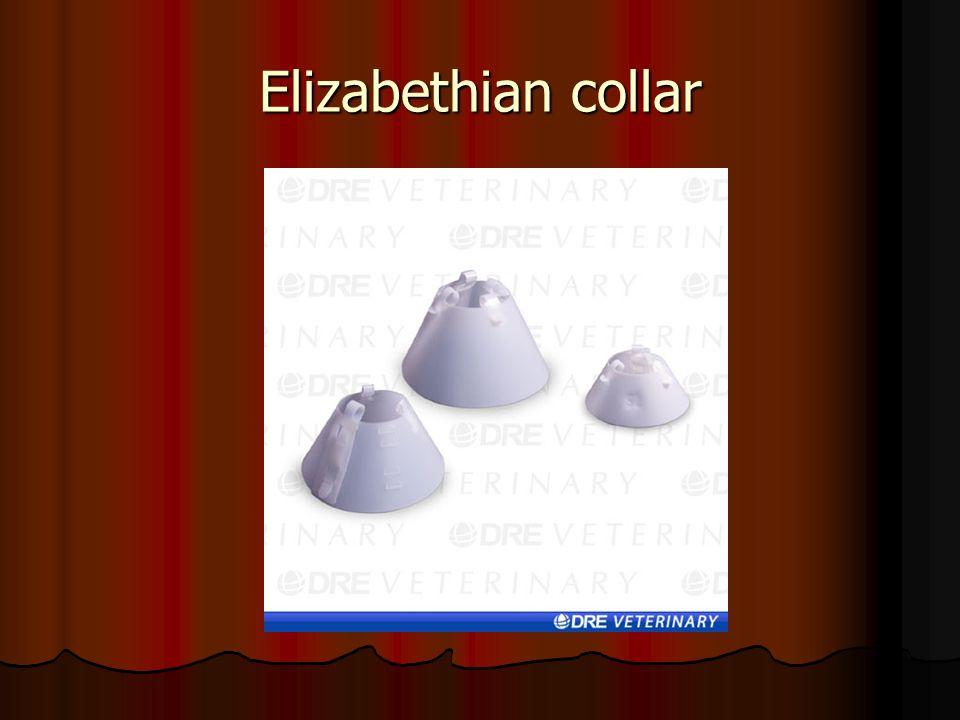 Elizabethian collar