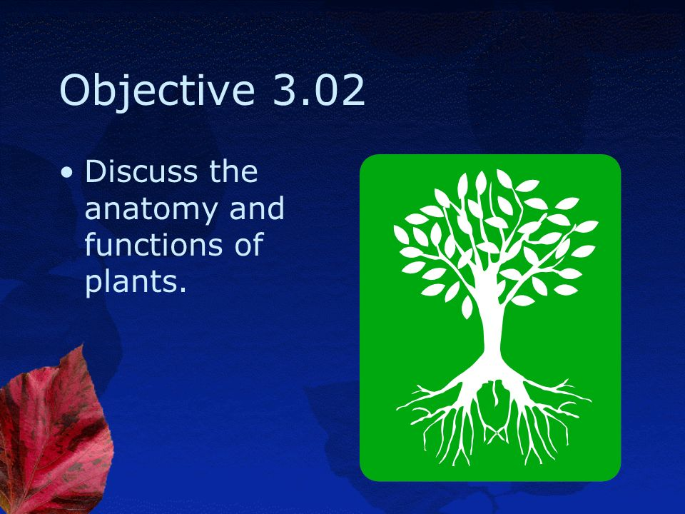 Objective 3.02 Discuss the anatomy and functions of plants.