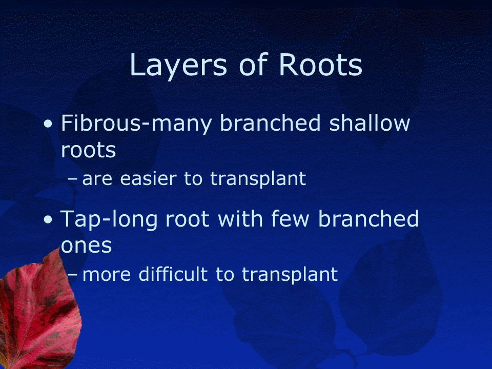 Layers of Roots Fibrous-many branched shallow roots